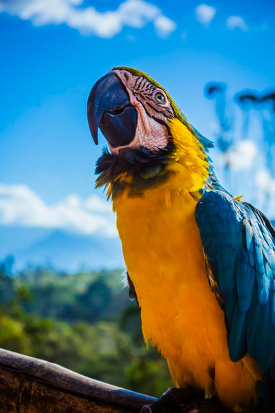 Colorful parrot against blue sky
