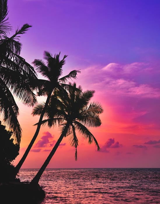 Palm trees in front of a tropical sunset