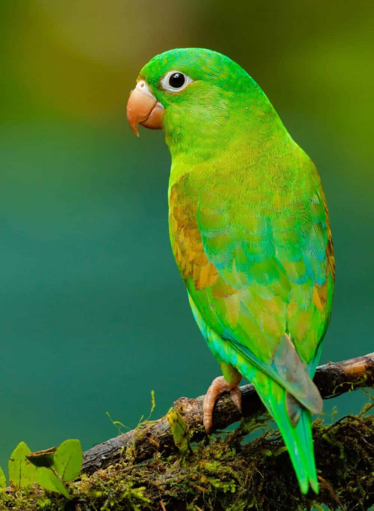 Small green parrot perched on branch