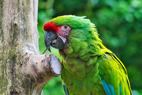 Green parrot next to a tree
