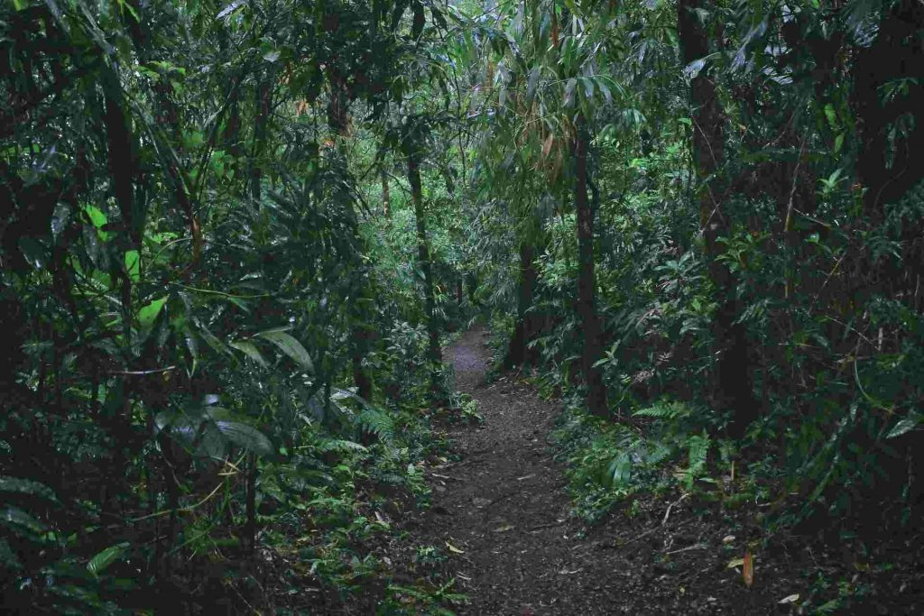 dense Costa Rica rainforest with dirt trail in the middle
