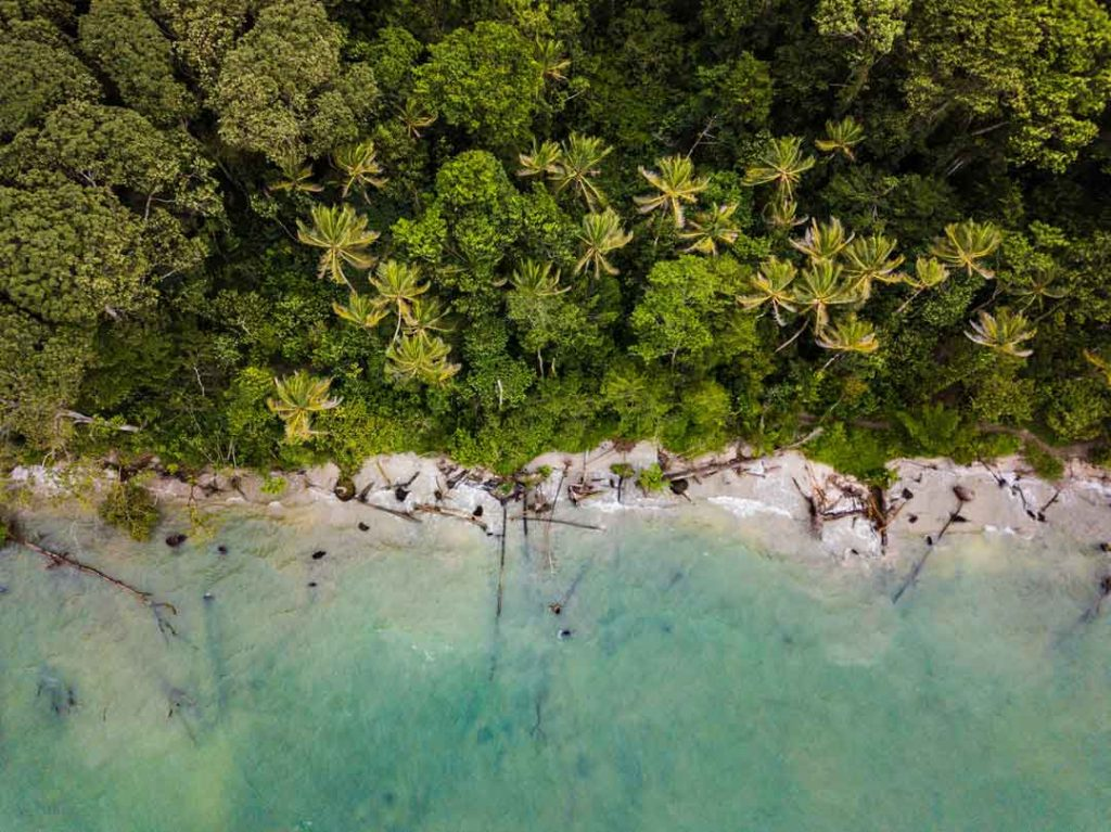 birds eye view of a tropical beach and forest in costa rica