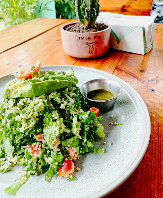 Quinoa and lettuce dish with avocado and small Twin Fin cactus.