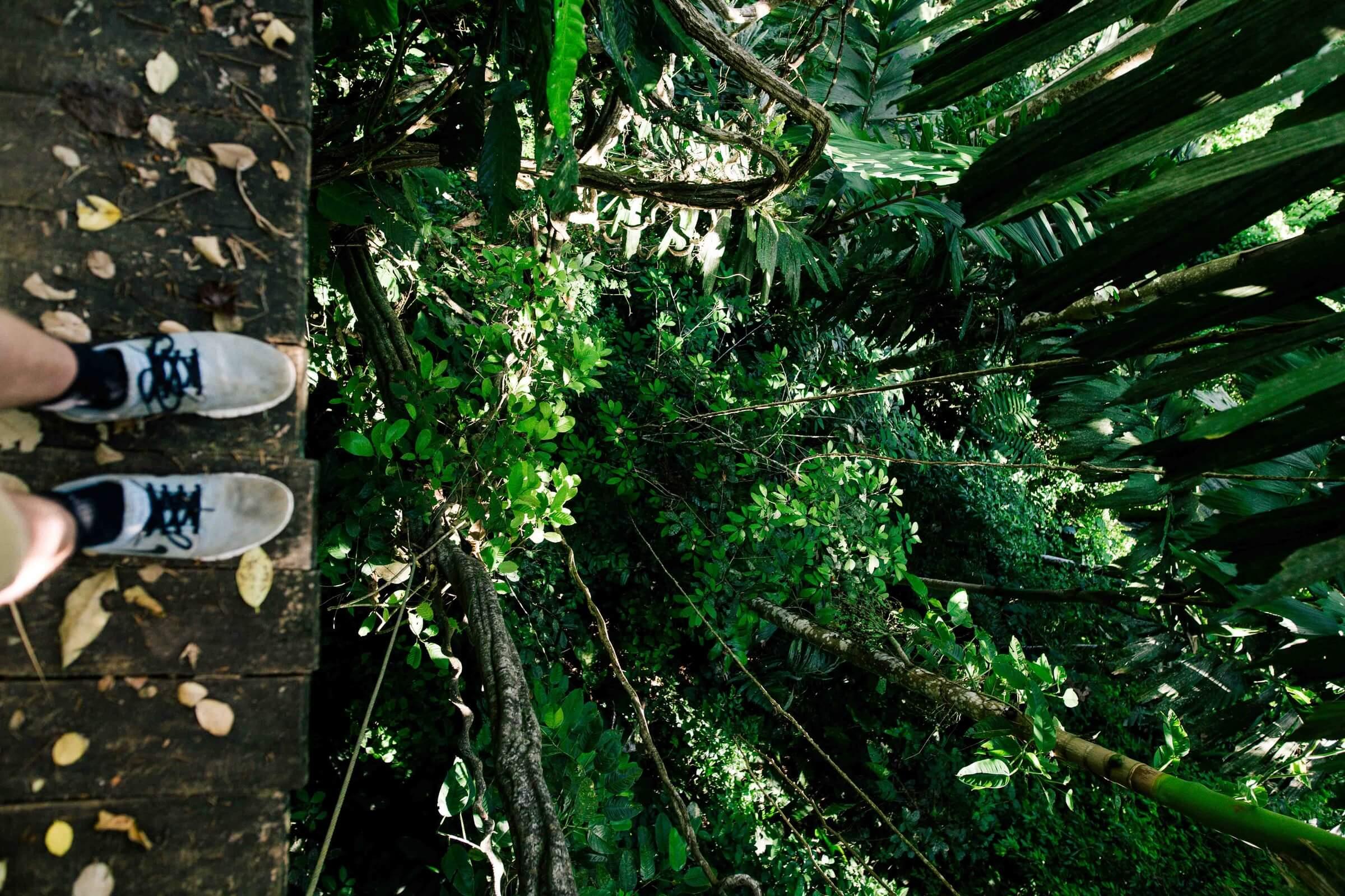 Feet standing on a boardwalk over lush, green jungle view