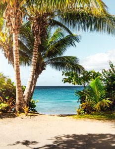 beautiful palm trees, sand, and water on private beach